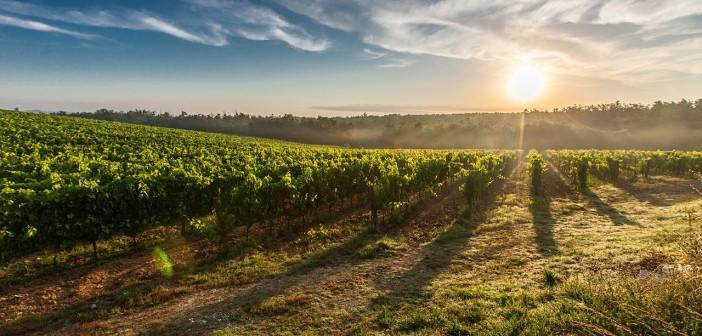 Ritorno all'agricoltura: alla riscoperta dei mestieri agricoli