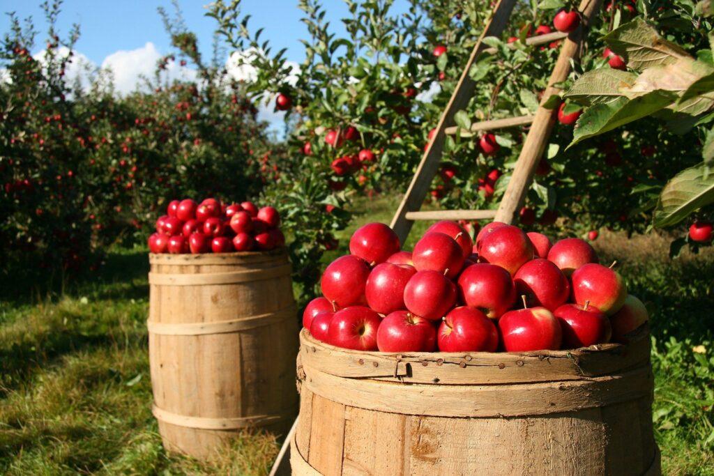 frutta autunnale elenco
